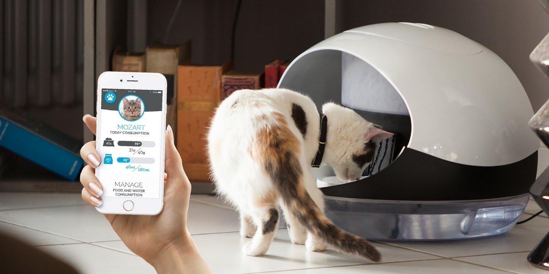 App para Alimentar Gatos
